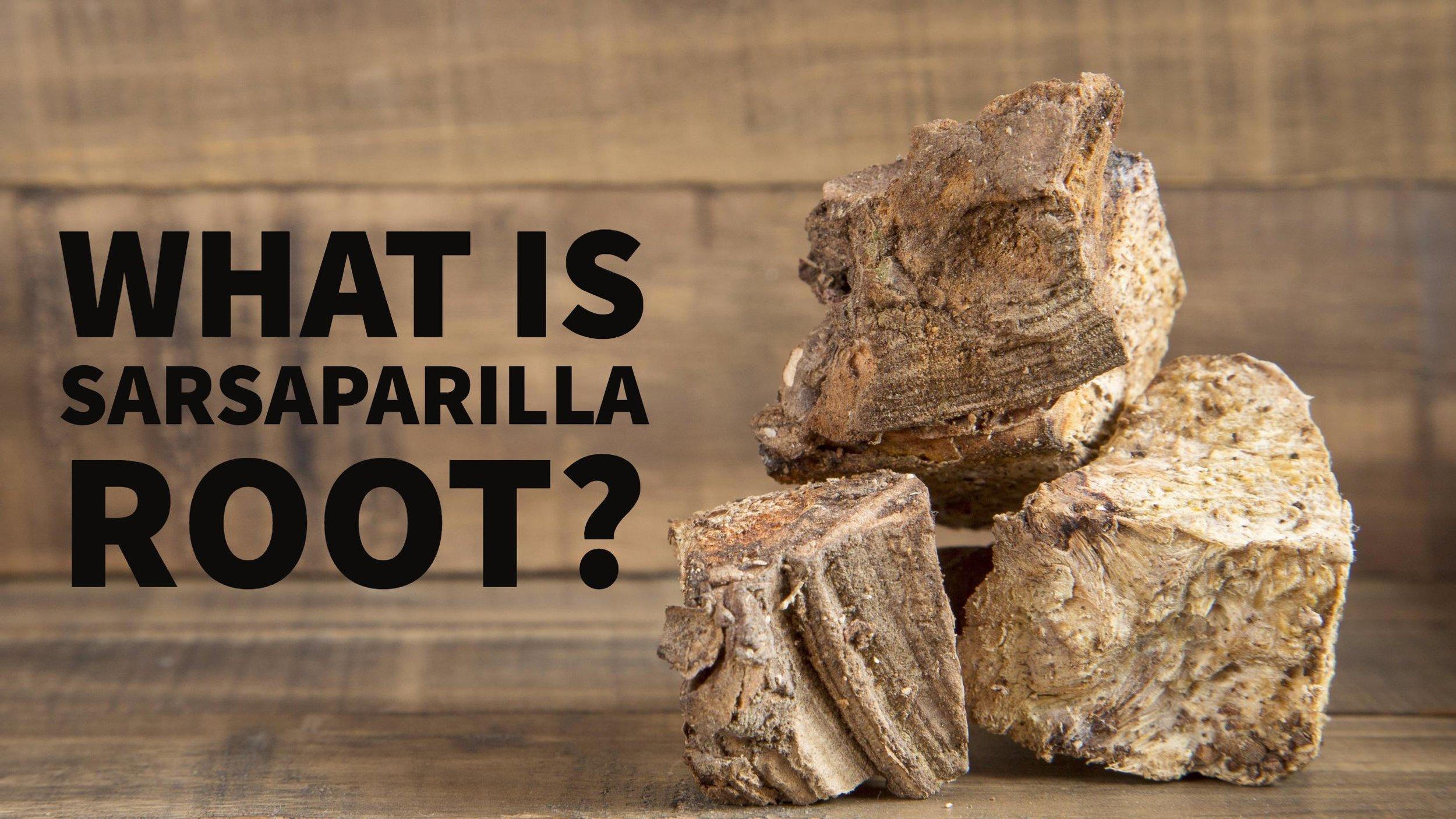 what is sarsaparilla root