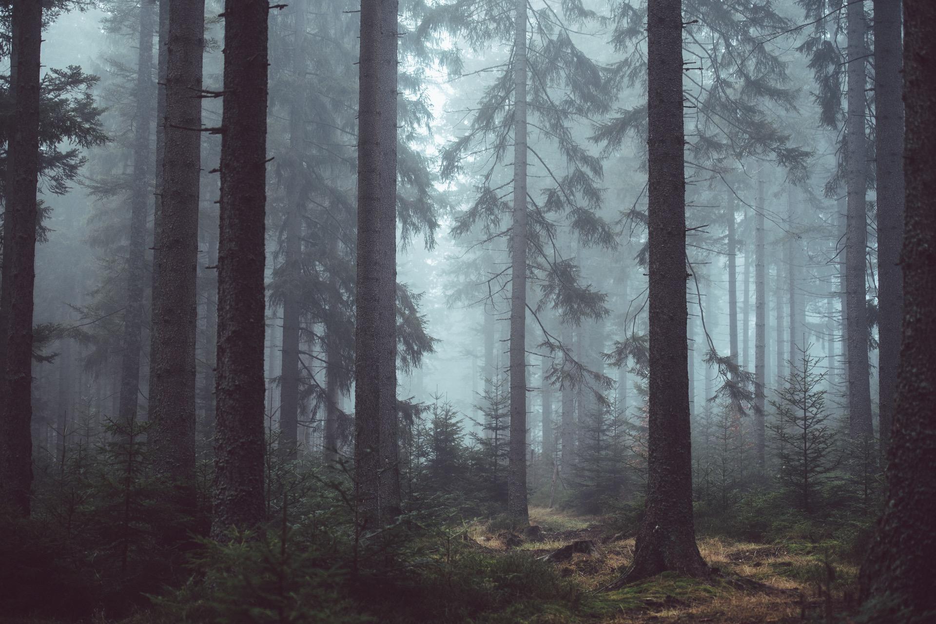Sarsaparilla likes dark, humid forests like this