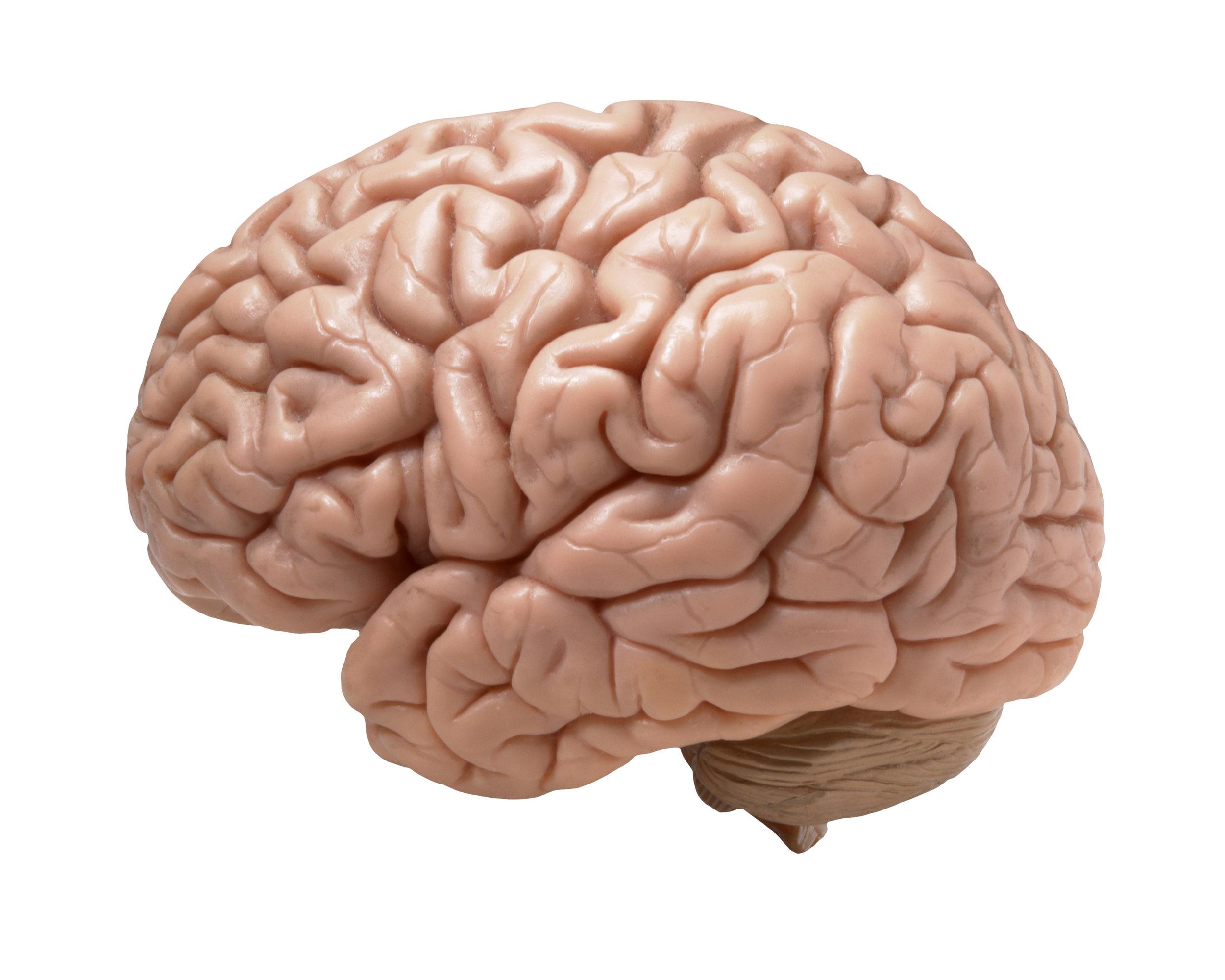 phosphatidylserine is found in the human brain naturally