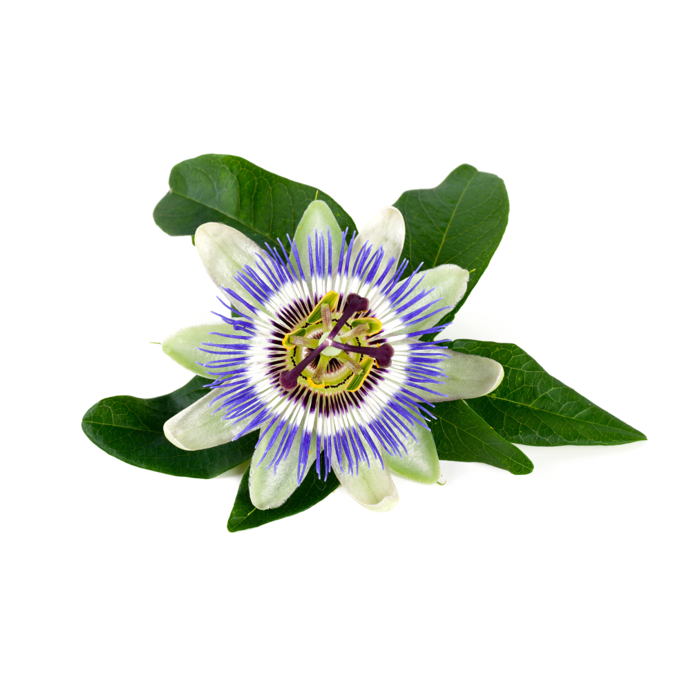 passionflower herb