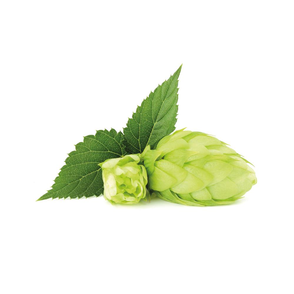hops-cover.jpg