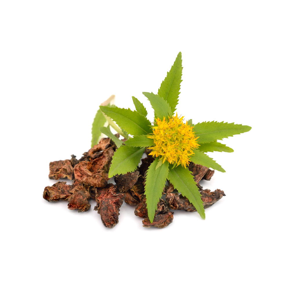 Rhodiola-herb.jpg