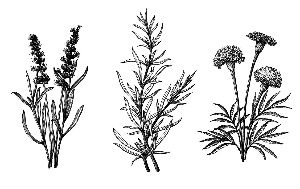 liquid-herb-dosages.jpg