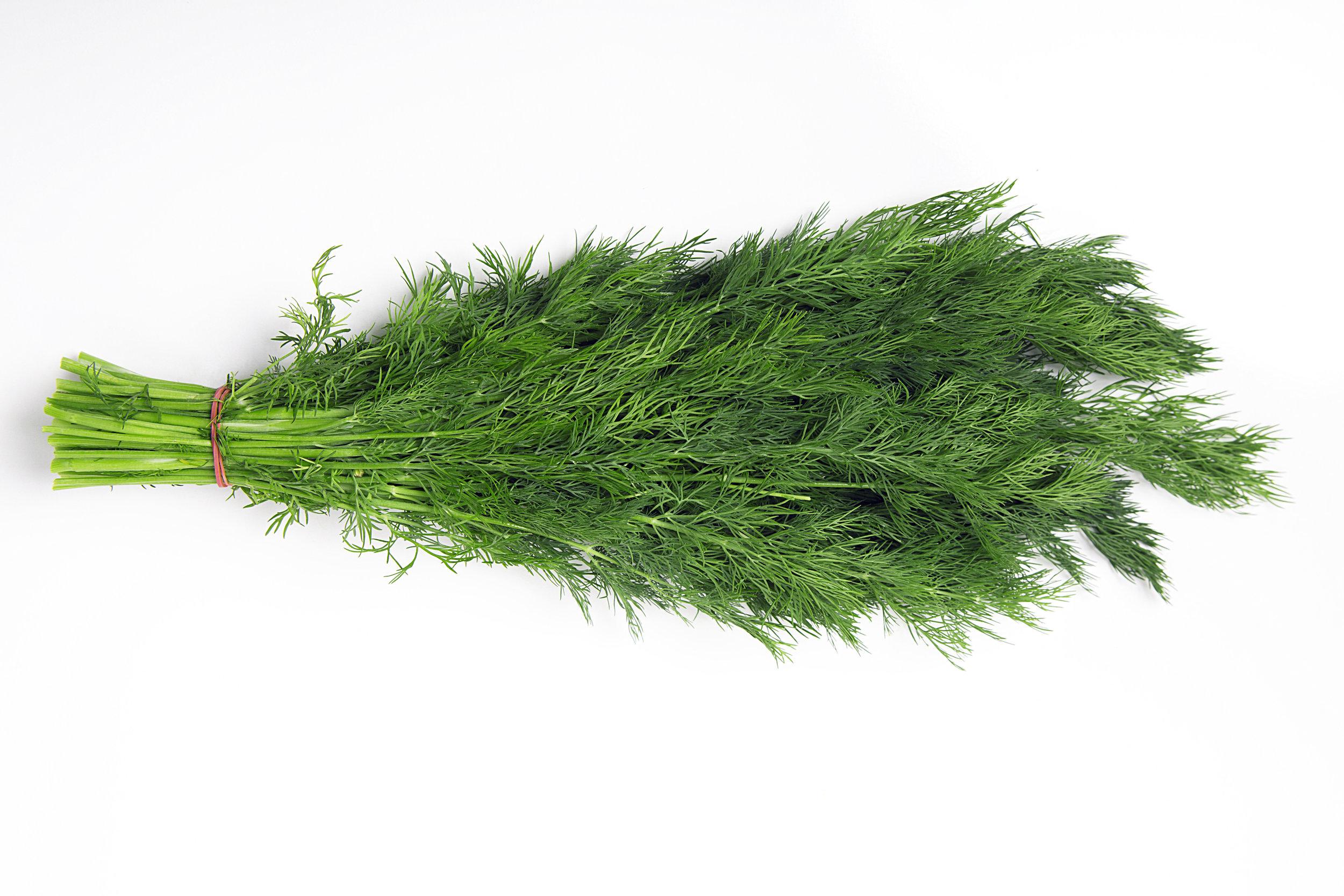 fennel fronds.jpeg