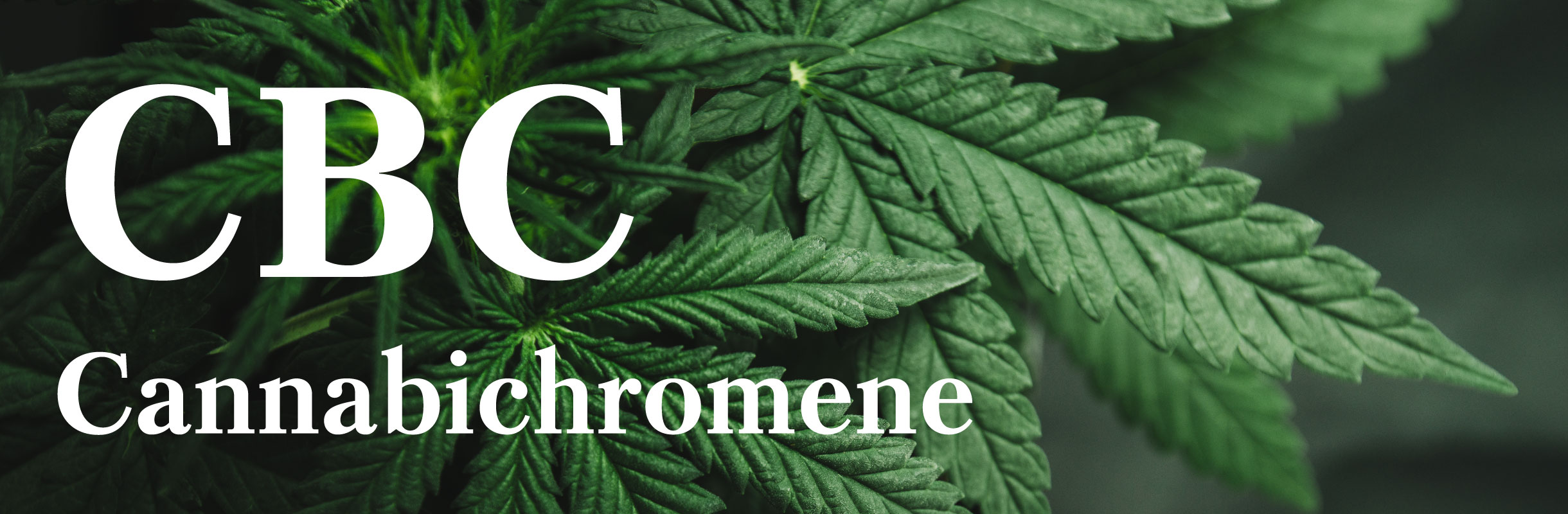 cbc-cannabichromene-header.jpg