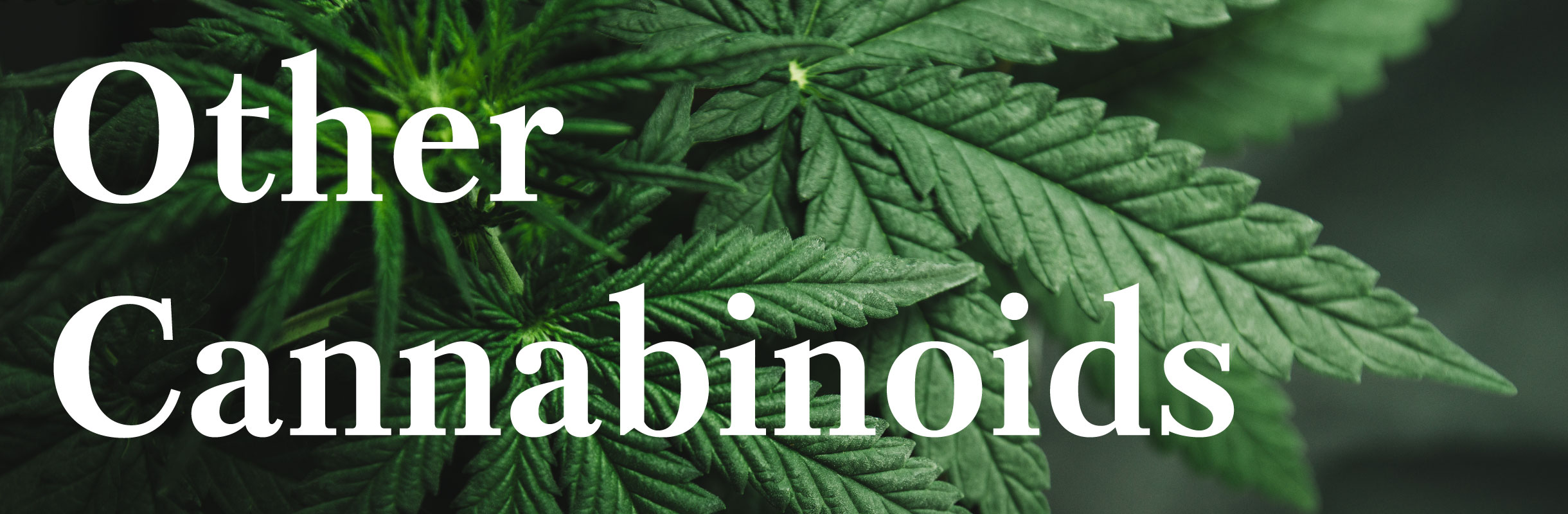 other-cannabinoids-header.jpg