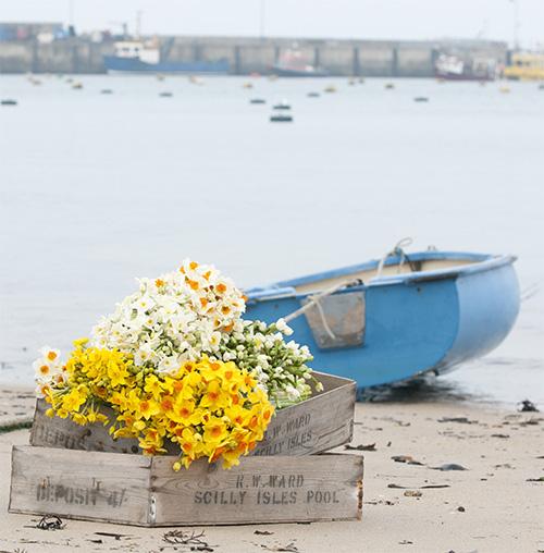 flowercooperativepic.jpg
