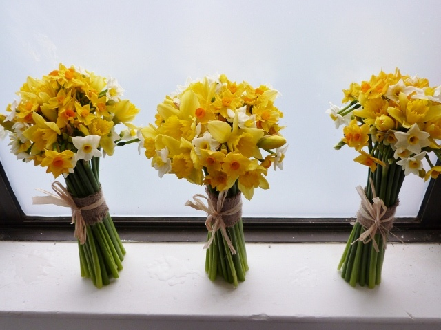 by Scented Narcissi