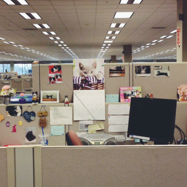 """Excuse the quality. This was an actual view from my cubicle at my last job. I tried to take it quickly before cat lady returned and """"told"""" on me."""
