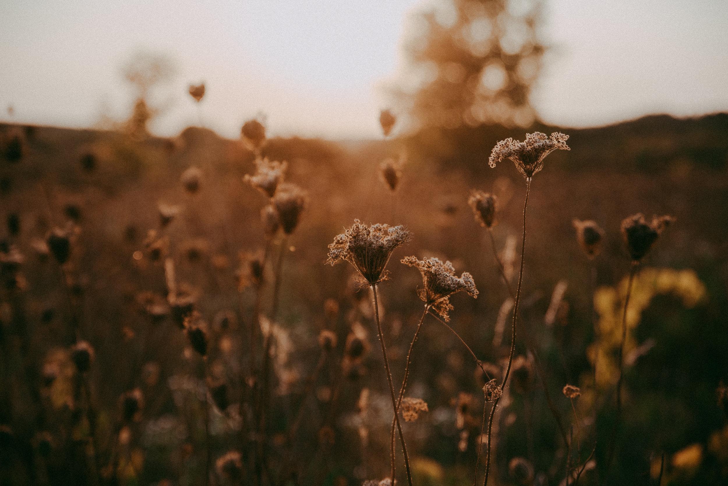 golden-hour-field.jpg