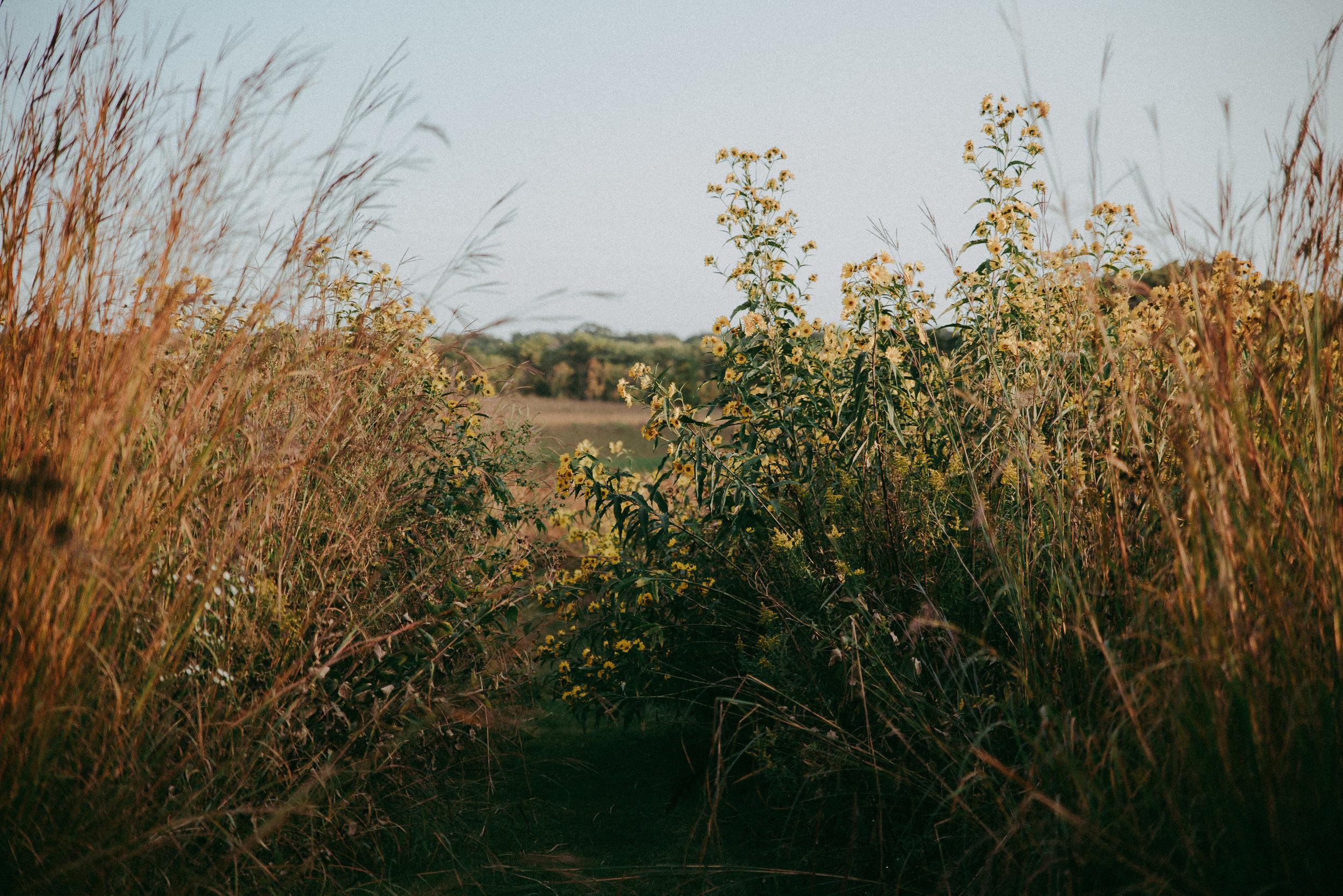 fall-field.jpg