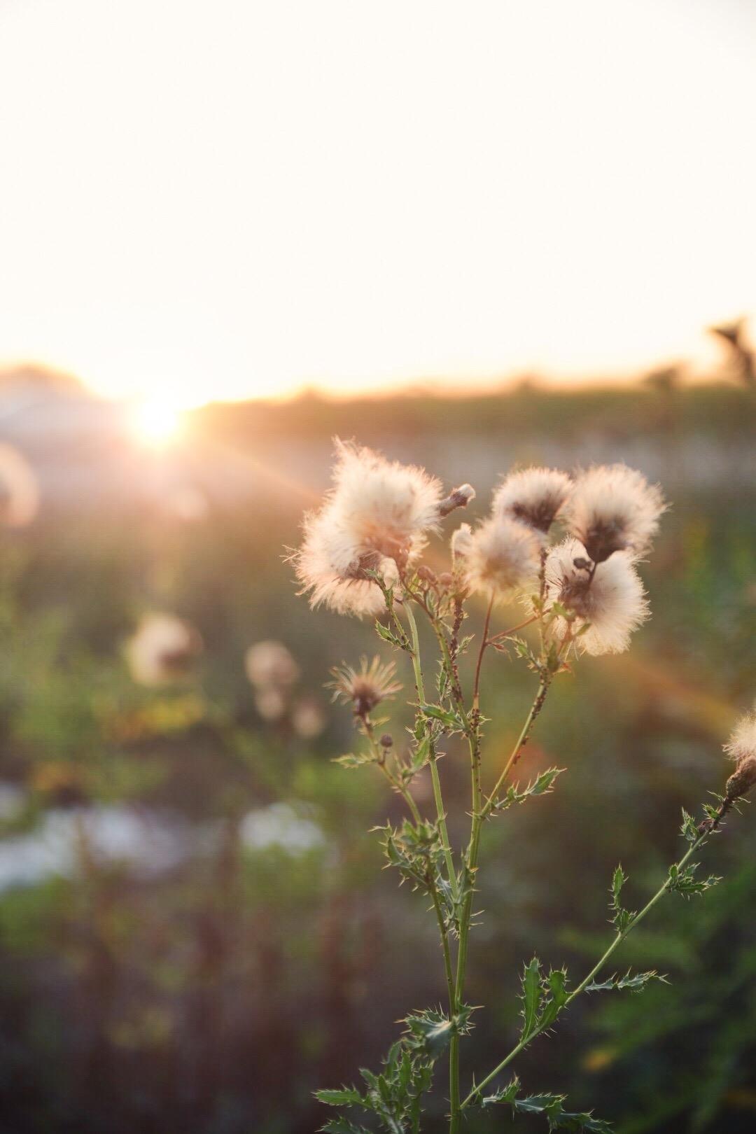 fall-sunset-sun-flare.JPEG