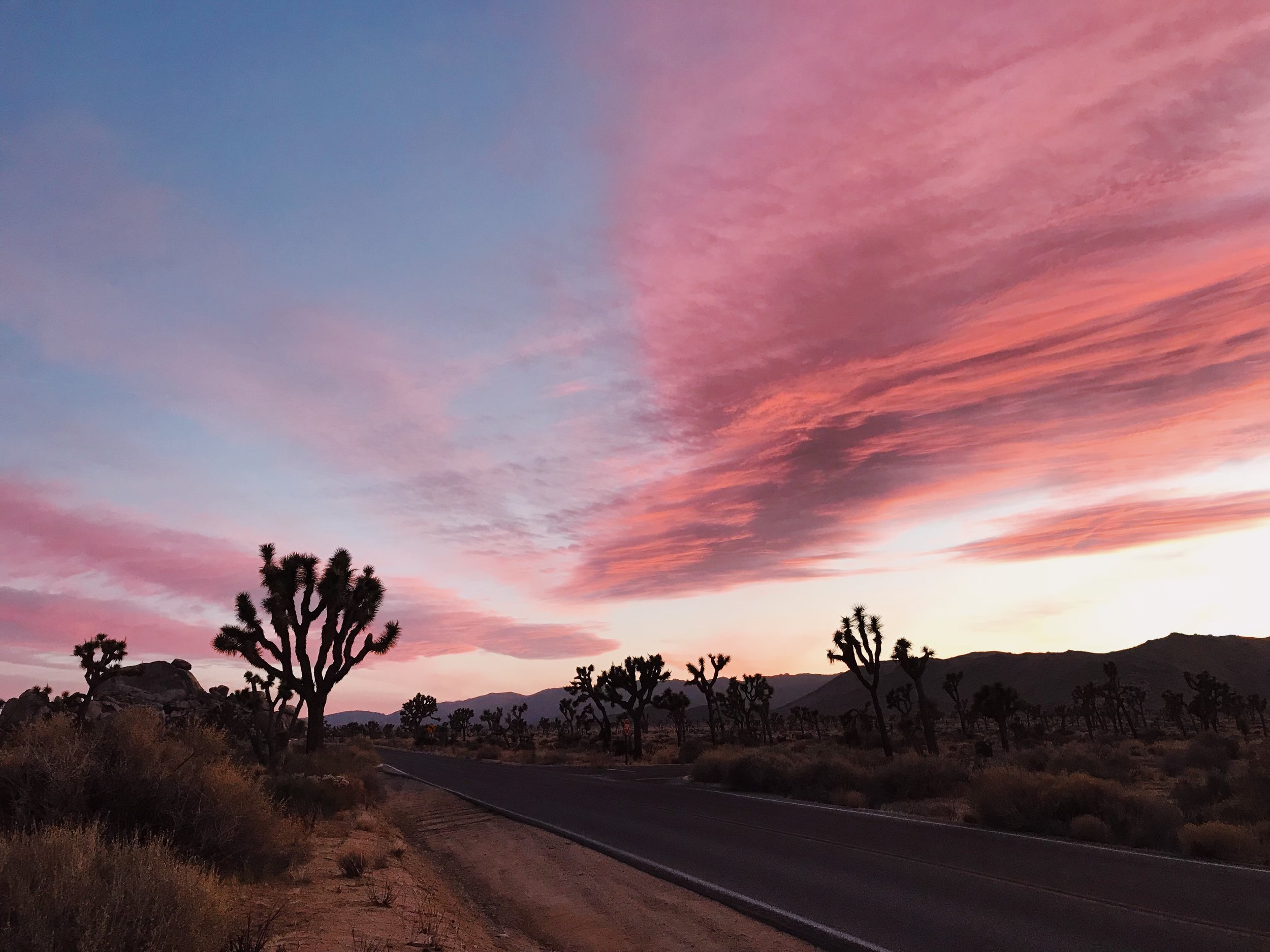 joshua-tree-sunset-photos.JPG