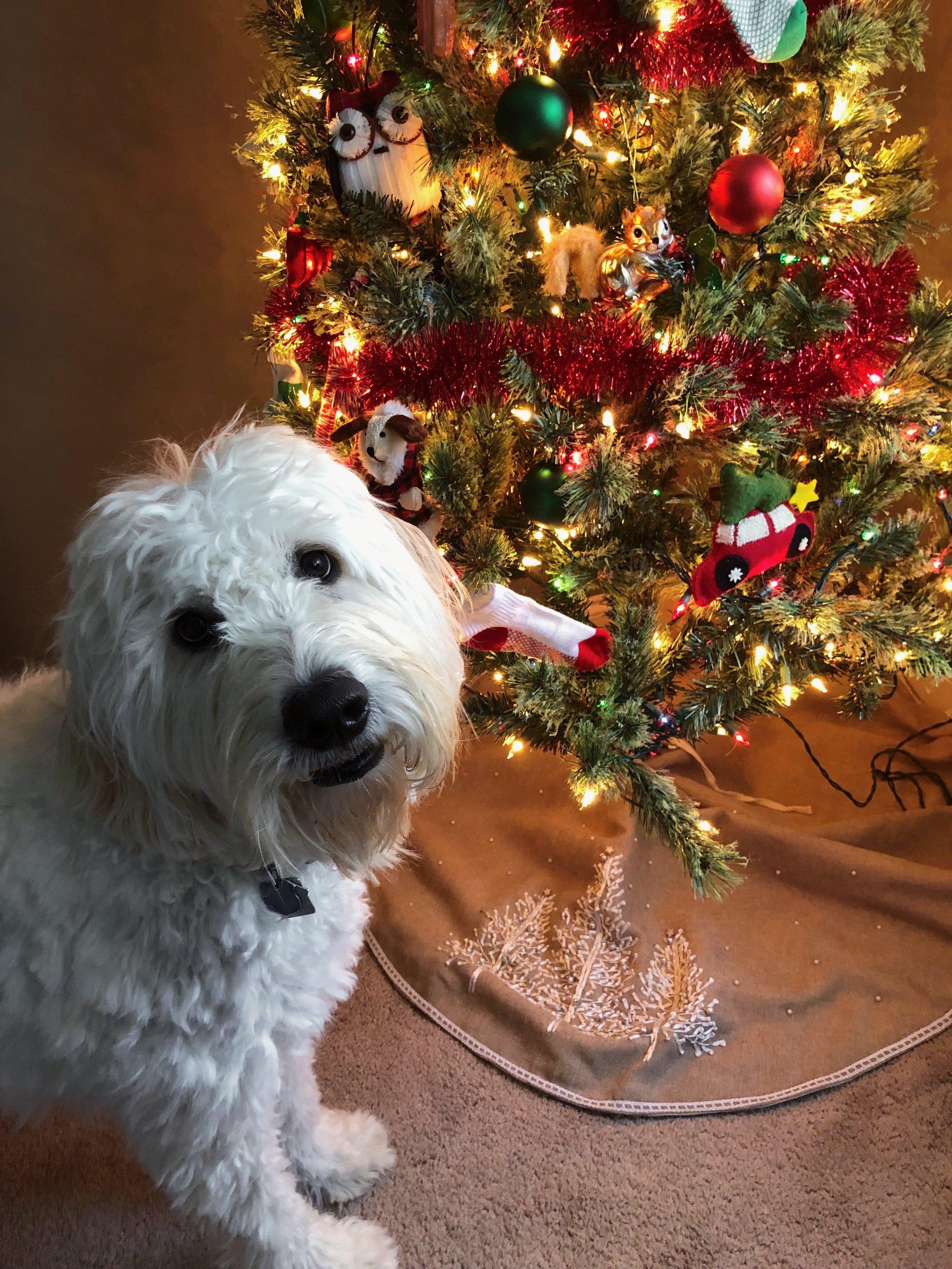 goldendoodle-christmas-tree.jpg