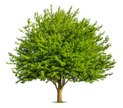Large Tree 2.png
