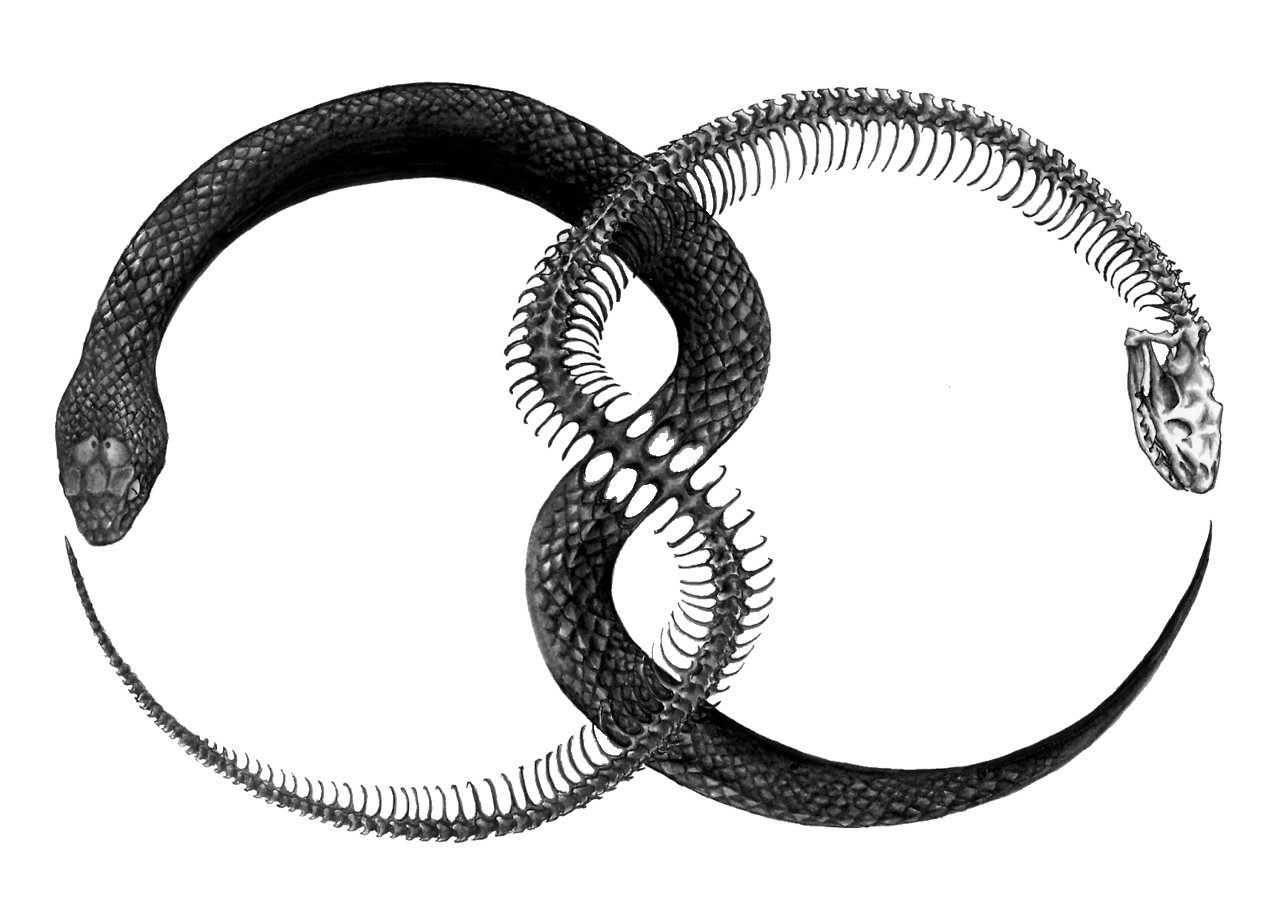 5-2-ouroboros-png-file.png