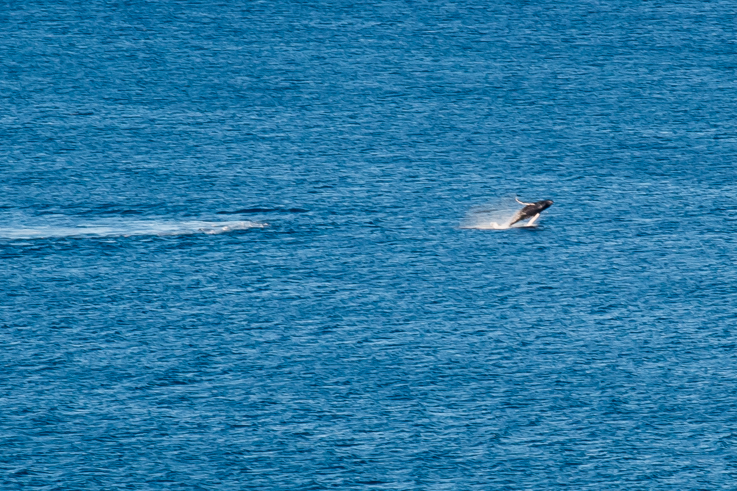 Baby Whale breech-mom is flowing close behind.