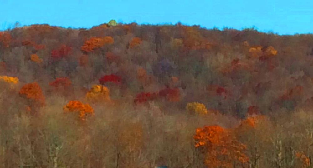Illuminated trees on the PA Pike