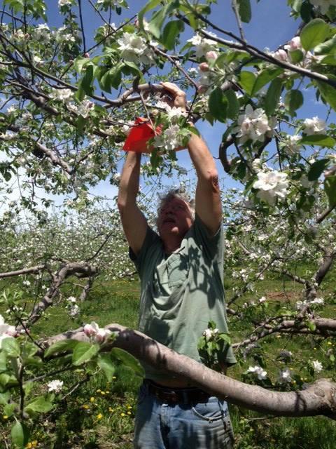 Tom checks one of many pheremone traps