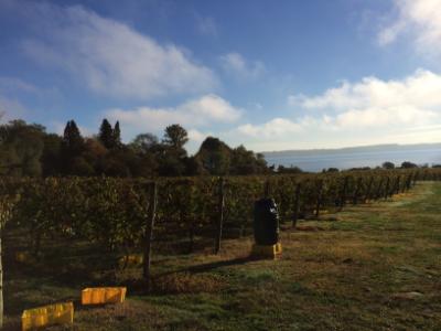At Greenvale Vineyards