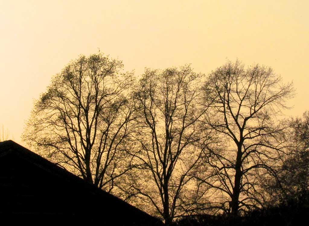 10of100_Silhouette-Sunset.jpg