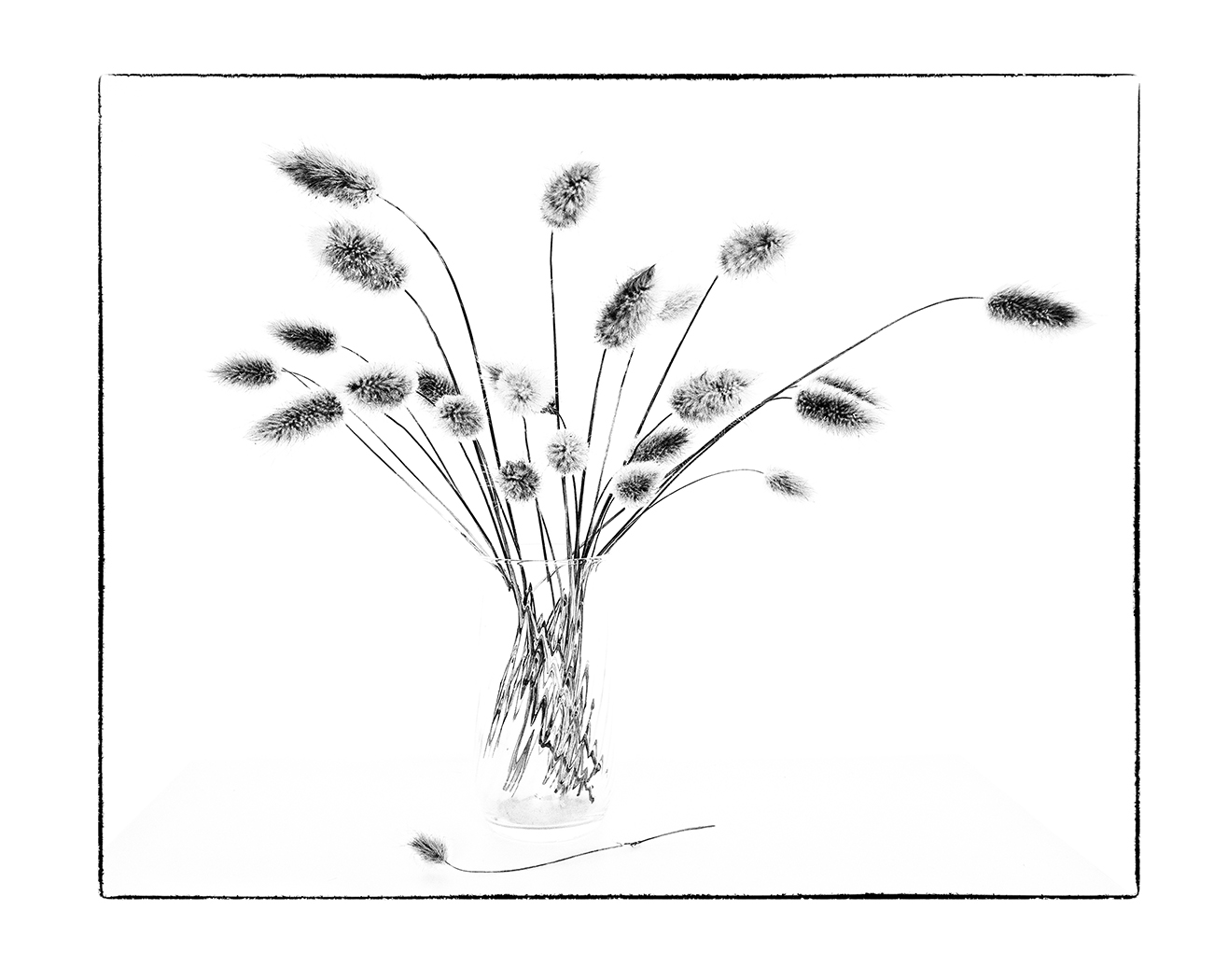 'Grasses' by Sarah Shelley