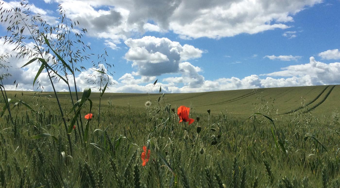 'Field Corner View' by Jo Horscroft