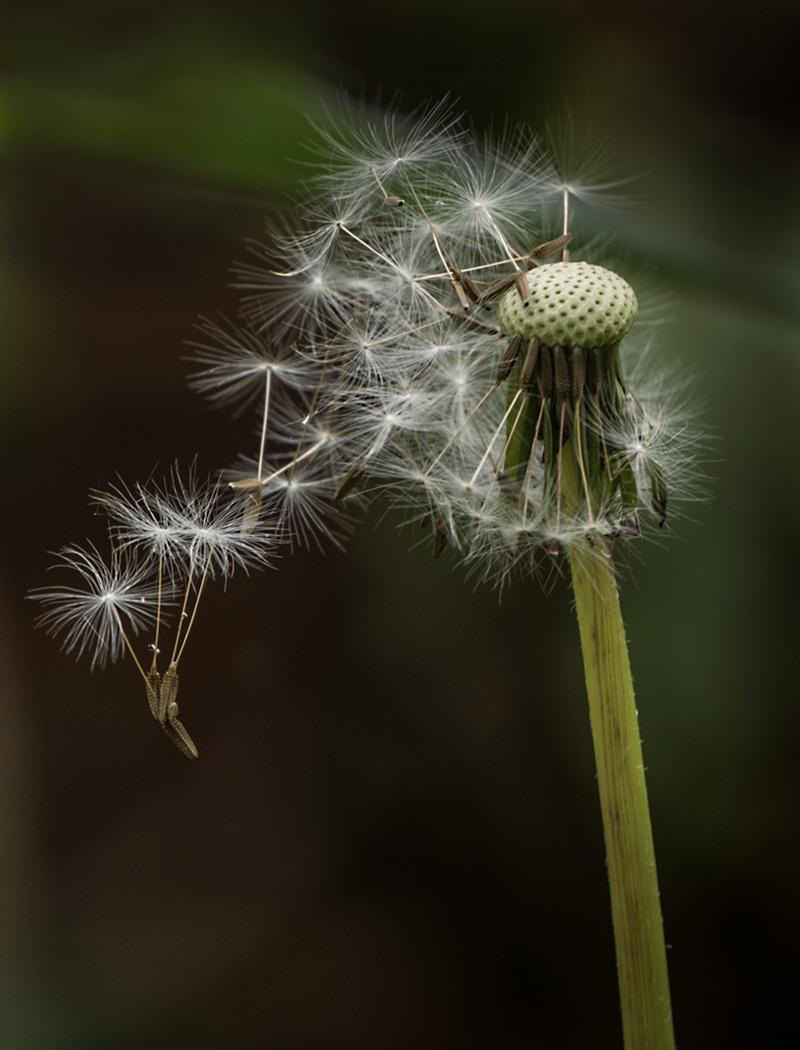 First 'Sudden Breeze' by Ian Porter