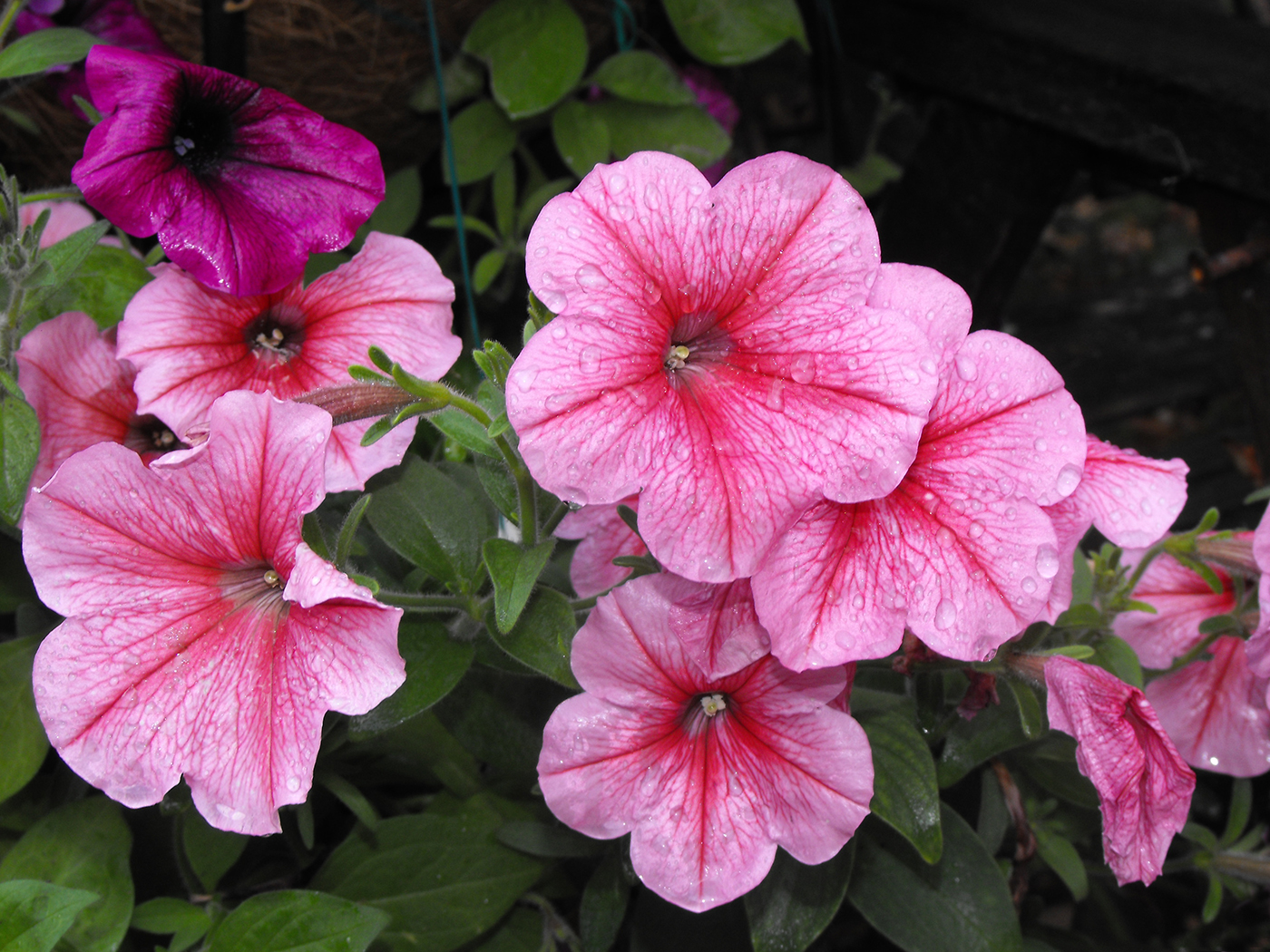 'Ellas Garden by Dave Osbourne
