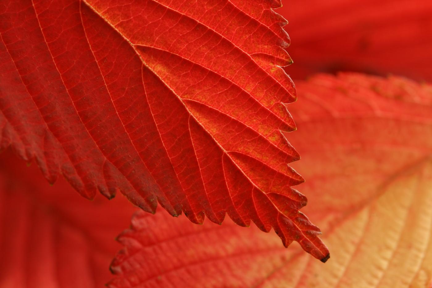 'Autumn' by Tony O'Reilly