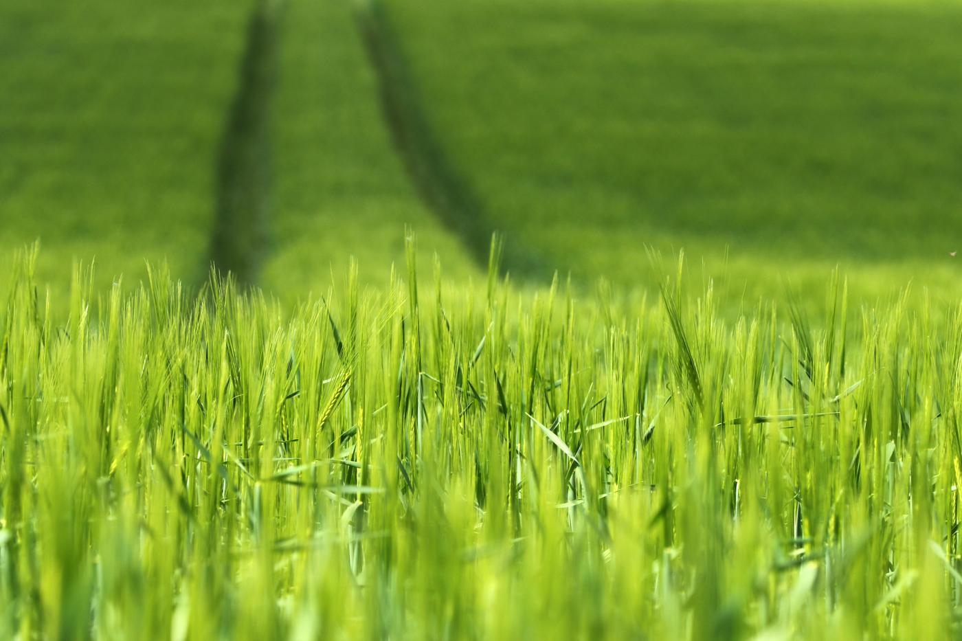 'Crop' by Tony O'Reilly