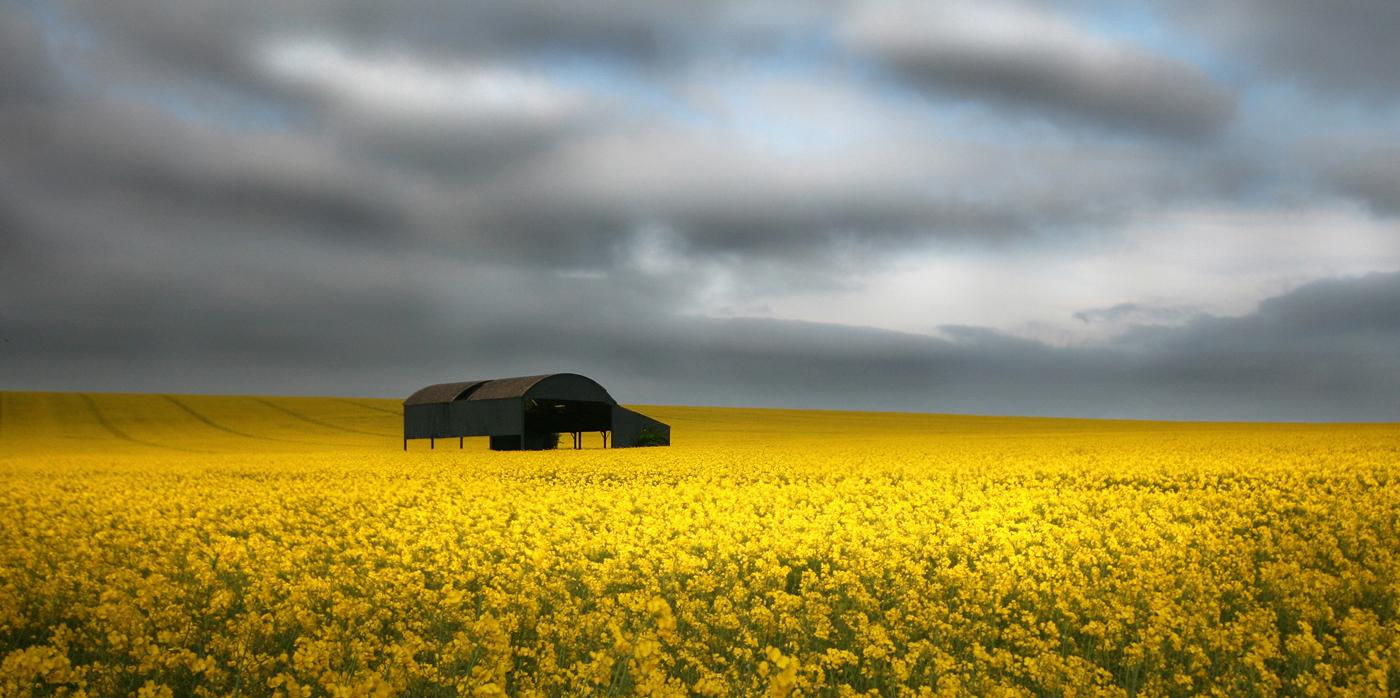 'The Barn' by Tony O'Reilly