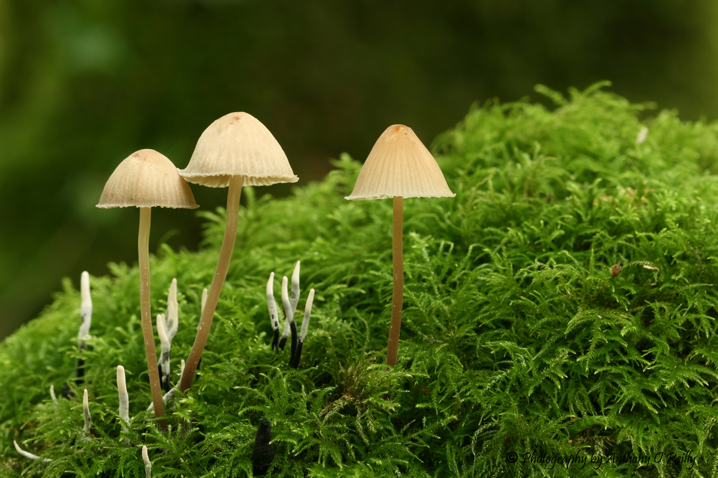 'Toadstools' by Tony O'Reilly