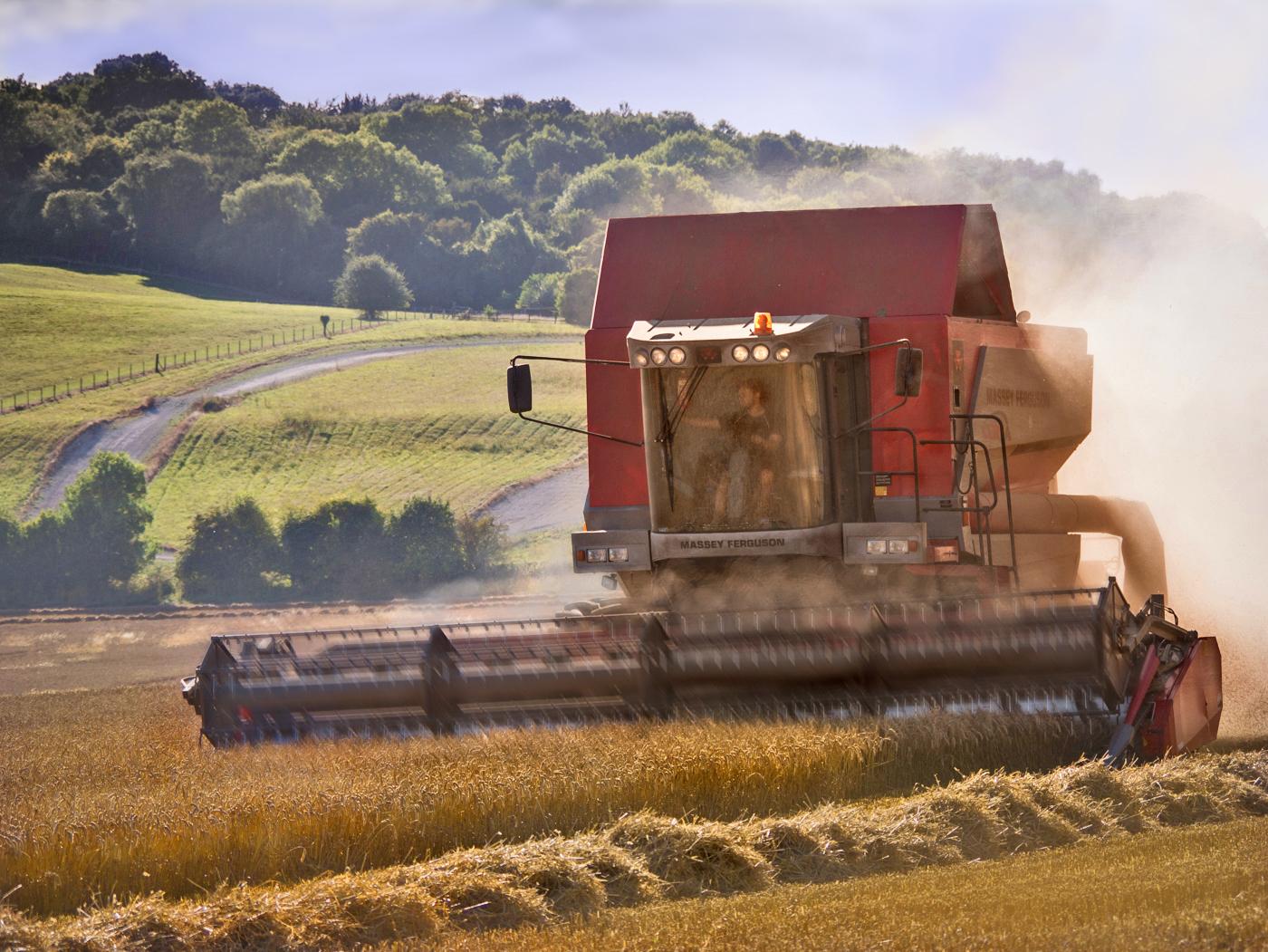 'Harvest' by Ian Porter