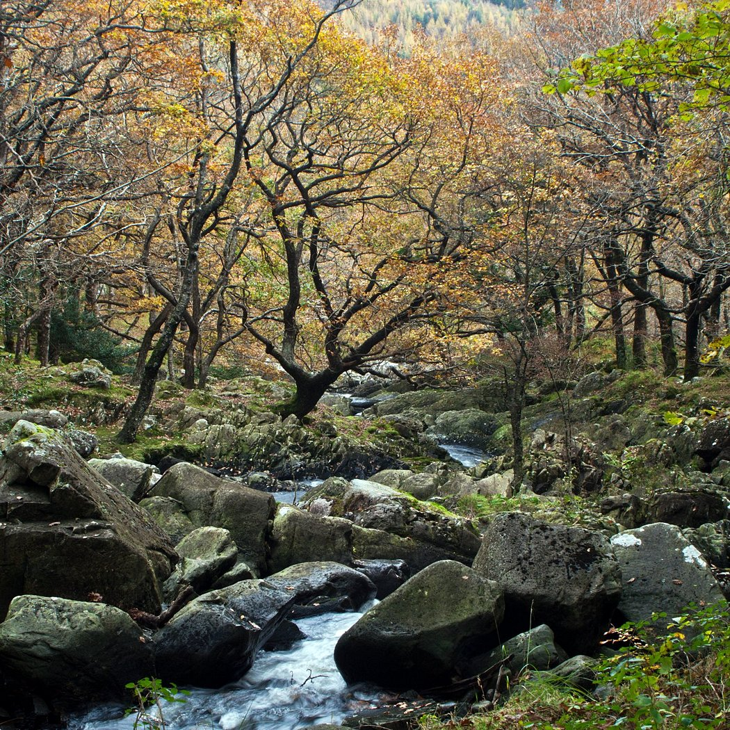 'Autumn Brook' by Peter Read
