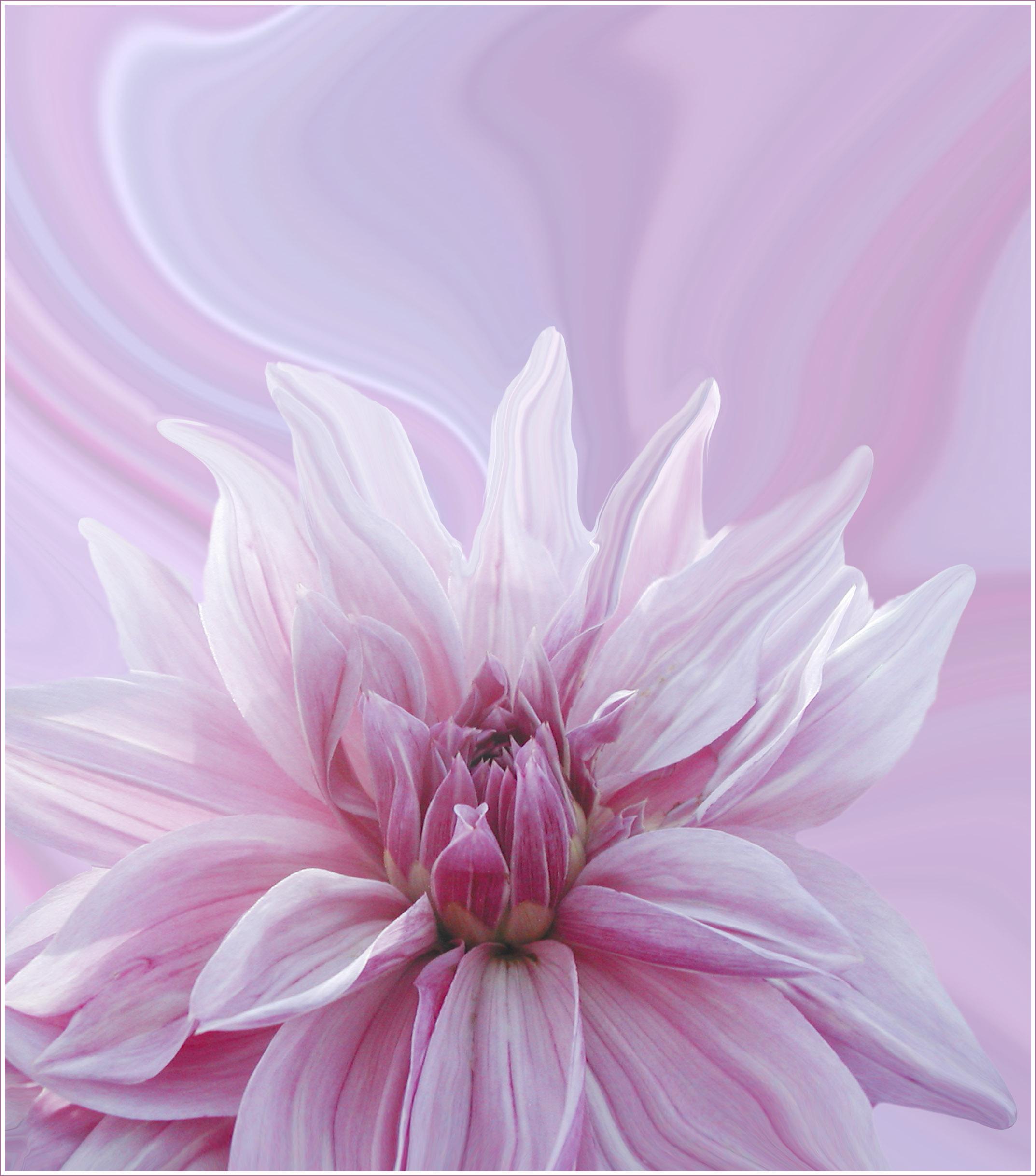 'Swirling Dahlias' by Sheila Read