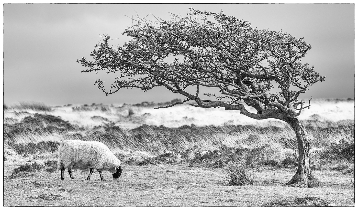 First 'Windy Exmoor' by Mark Cooper
