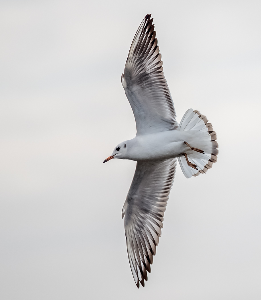First 'Just a Seagull' by Mark Cooper
