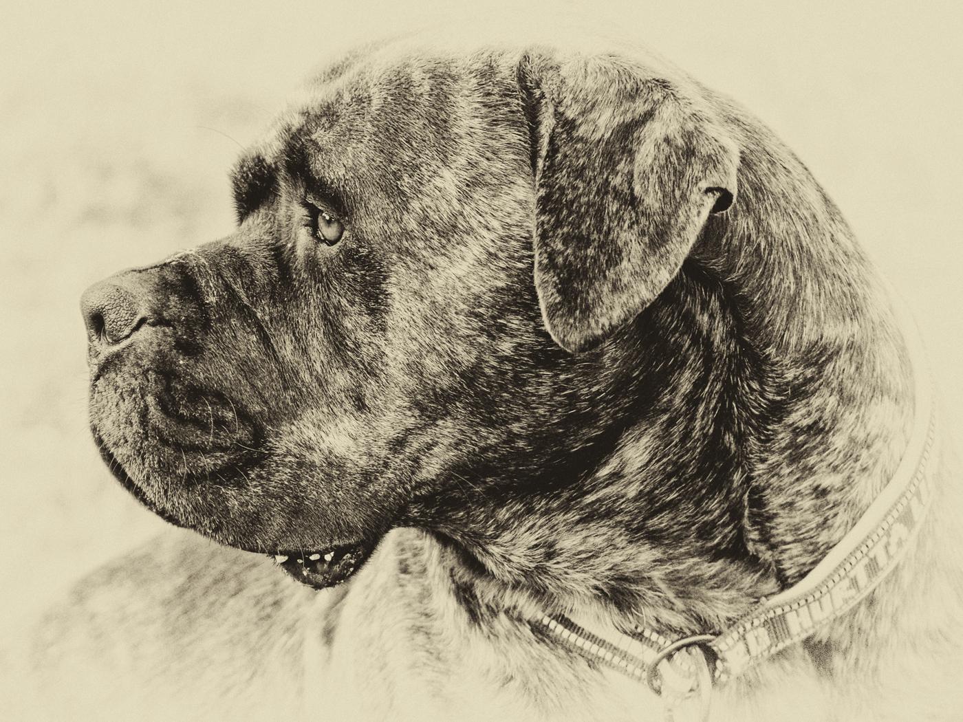 First 'Doogle' by Sally Money