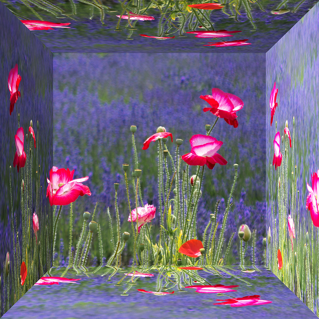 First 'Poppies and lavender' by Roger Ellway