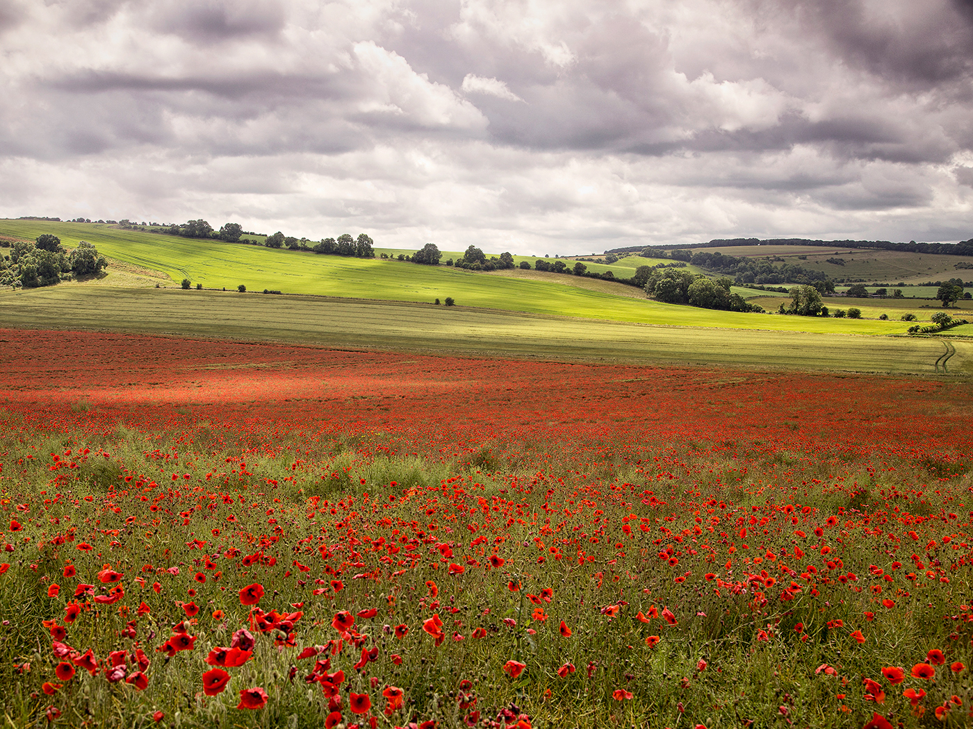 First 'Poppyscape' by Tony Oliver