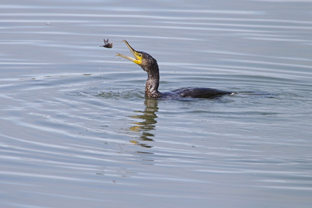 First 'Catch' by Richard Ramsay