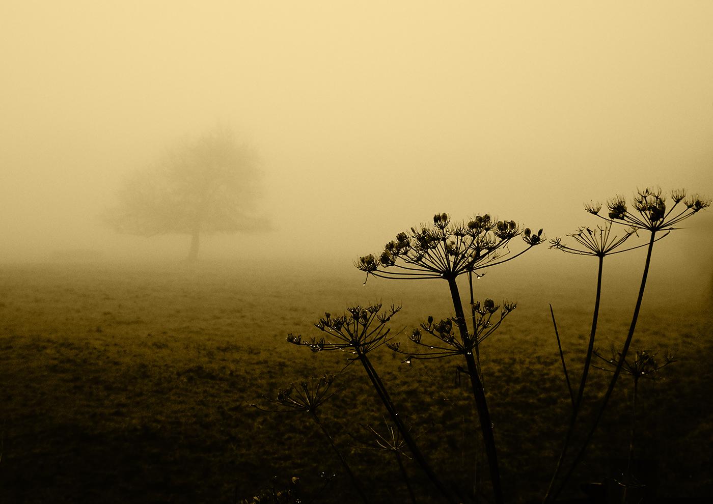 'Misty Morning by Sally Money