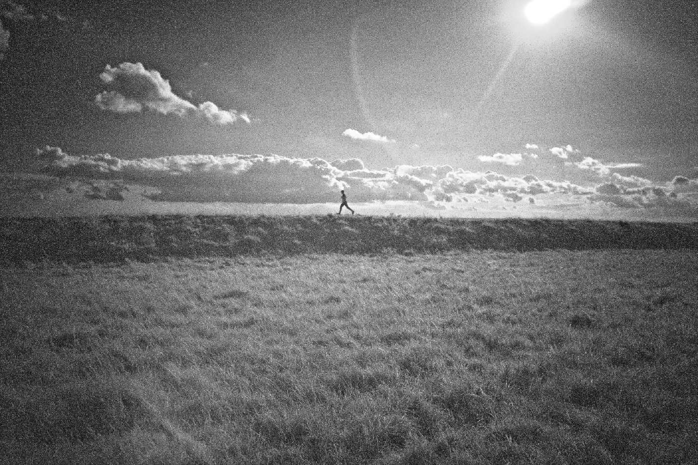 33_Figsbury Runner_David Miesner