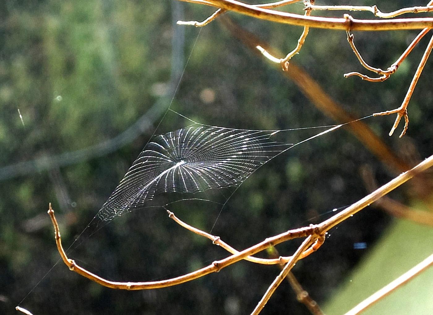 61_Nature's Geometric Precision_Michael Hillier