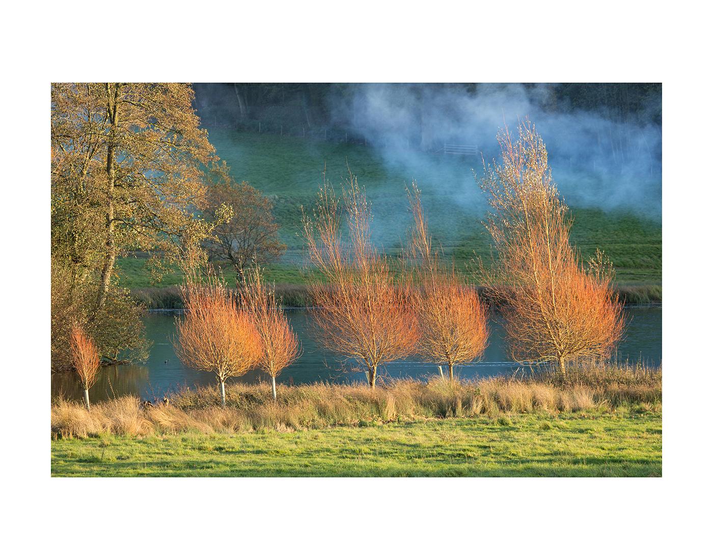 70_Flaming Trees_Sarah Shelley
