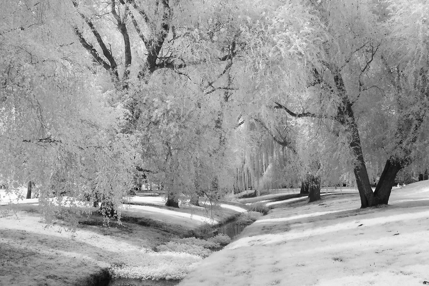 74_A Salisbury Park_Tony O'Reilly