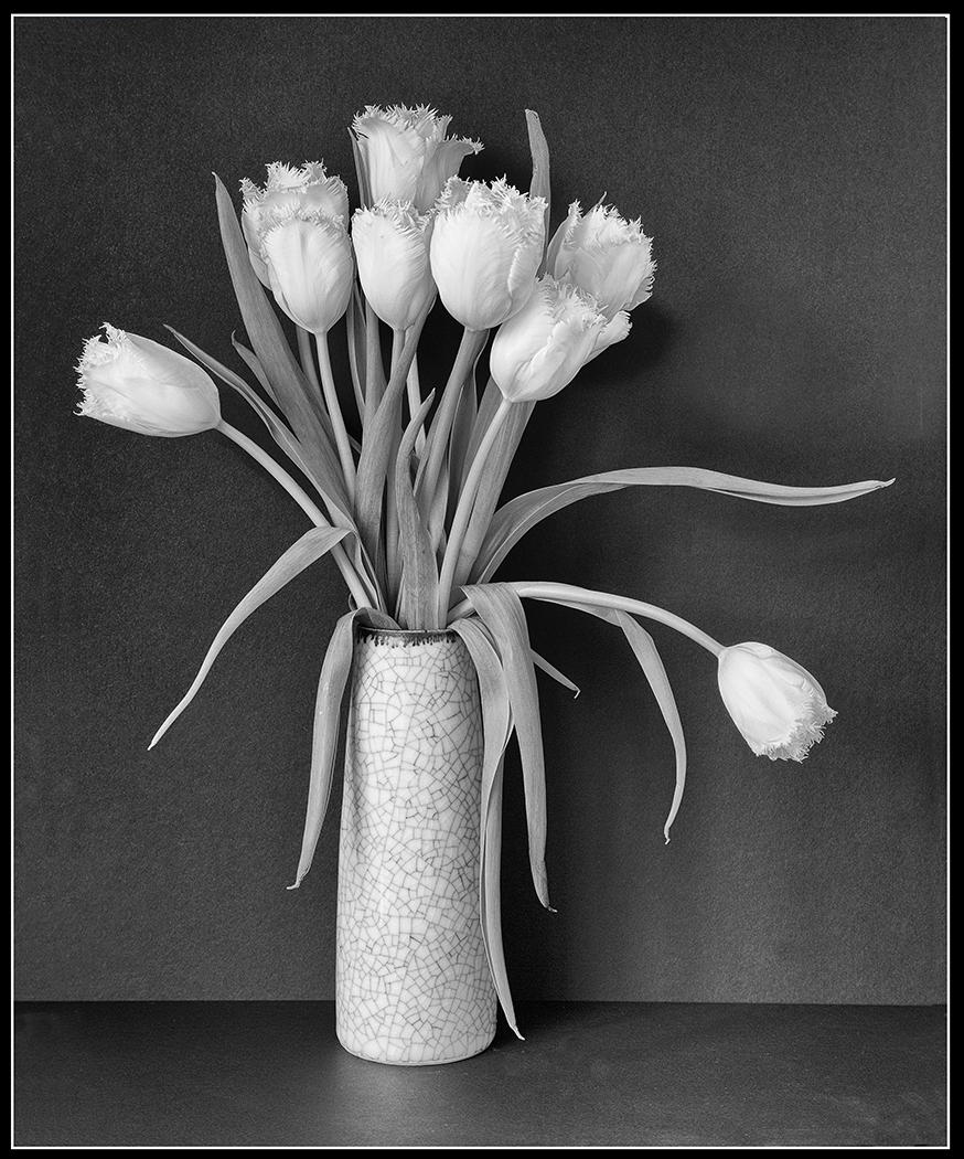 Second 'White Tulips' by Sarah Shelley