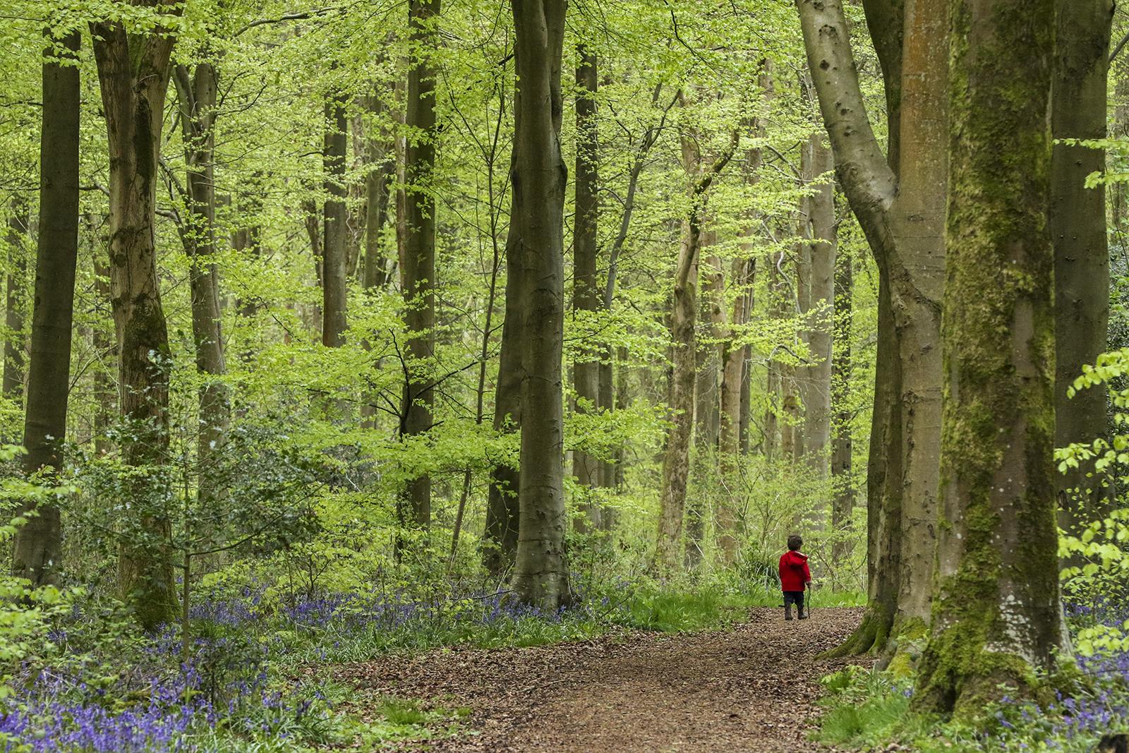 First 'Little man on a big walk' by Tony O'Reilly