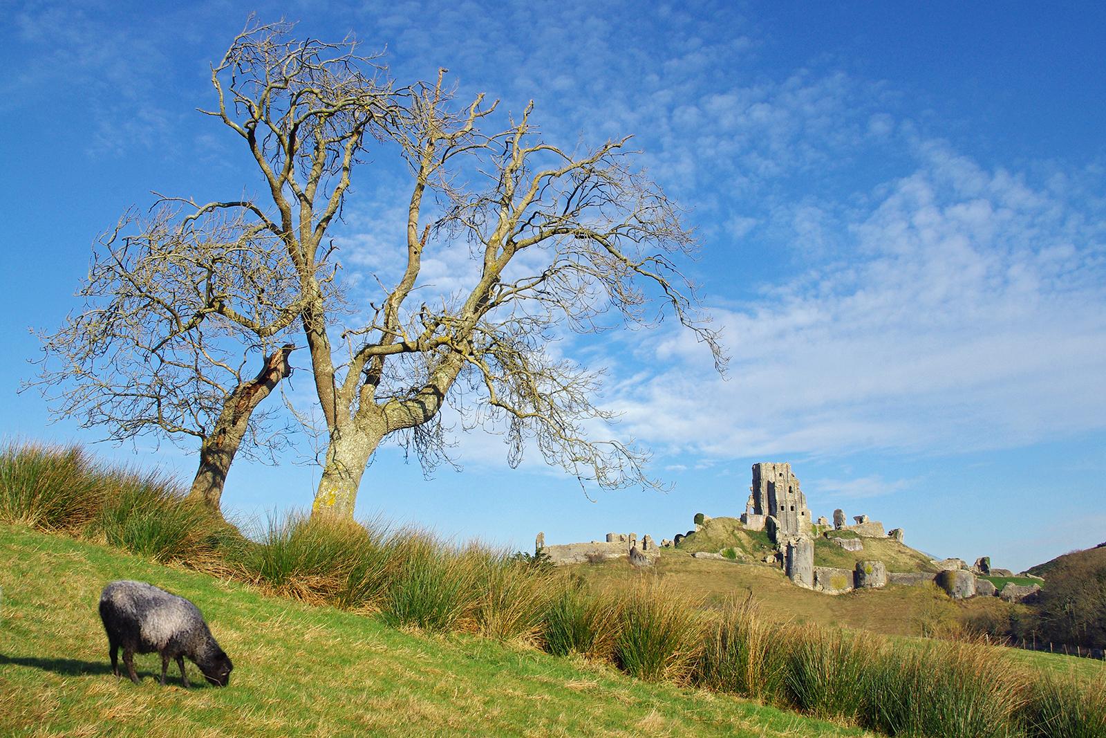 23_Corfe Castle_Richard Ramsay